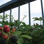Food growing on the bridge